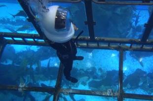 إن كنت من محبي الاستمتاع والمغامرة، فينتظرك في دبي مغامرة مثيرة ومشوقة مع تجربة غوص السكوبا مع إطعام أسماك القرش في دبي أكواريوم داخل دبي مول، إذ يعد أكواريوم دبي وحديقة الحيوانات المائية، أحد المعالم الشهيرة في دولة الإمارات، حيث يمكنك هناك العثور على أكثر من 300 نوع من الحيوانات البحرية في هذا الحوض الذي تبلغ سعته 10 ملايين لتر من المياه، والذي يعد الأكبر من نوعه في العالم. هناك العديد من الطرق للزوار لتجربة أكواريوم دبي؛ بما في ذلك جولة بالقارب ذو القاع الزجاجي وتجربة الغطس في القفص وحتى ارتداء خزان أكسجين للسباحة مع أسماك القرش. السباحة مع أسماك القرش في دبي أكواريوم في دبي مول تعتبر تجربة السباحة مع إطعام أسماك القرش في دبي أكواريوم في دبي مول واحدة من أكثر الأشياء تشويقا وإثارة للقيام بها، وبصرف النظر عن تكلفة التجربة وفرص المغامرة، ينتظرك هناك الكثير من السعادة والمرح. وتعد تجربة دبي أكواريوم فرصة رائعة للأشخاص الباحثين عن الترفيه والمغامرة، مع السباحة ما بين أكثر من 33،000 من الحيوانات المائية، وتعتمد متطلبات الغوص مع سمك القرش على ما إذا كنت غواصًا معتمدًا أم لا، وفي جميع الأحوال سيمكنك المشاركة في التجربة بعد الانتهاء من دورة قصيرة مع مدربون متخصصون. إليك بعض الأشياء التي يجب عليك ملاحظتها قبل حجز تجربة الغوص مع سمك القرش. لا يسمح بأي كاميرات تعمل تحت الماء، حيث يوجد مصور خاص لالتقاط مجموعة من أجمل الصور التذكارية الرائعة. حفاظا على قواعد السلامة والنظافة، سيتم توفير جميع المعدات الخاصة بتلك التجربة، وذلك في سبيل حماية النظام البيئي في الاكواريوم، مع جنب التلوث الصحي من المعدات الغير معقمة. يمكنك إحضار ملابس السباحة الخاصة بك لتجربة الغوص هذه، فيما تتوفر أيضًا ملابس السباحة مقابل تكلفة إضافية الحد الأدنى للعمر والطول الخاص بالتجربة ينطبق على الباقة المختارة. جدول الغوص هناك 3 لقاءات لمشاهدة سمك القرش تقدم يوميا، ولكن يجب أن تكون هناك قبل ساعة واحدة على الأقل من التجرية، وذلك من أجل الإعداد للغوص، واعتمادًا على ما إذا كنت غواصًا معتمدًا أم لا ، سيكون وقت الغوص حوالي 20 إلى 30 دقيقة. لقاء القرش في دبي أكواريوم هناك أيضا خيار آخر متاح لأولئك الذين يريدون الاستمتاع وجها لوجه مع أسماك القرش وغيرها من الحيوانات المائية الـ 33000 دون الحاجة إلى تعلم كيفية الغوص، 